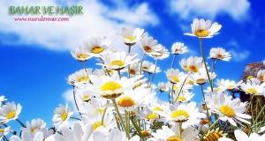 Bahar ve Haşir